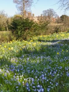 Spring flowers in Cambridge